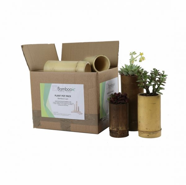 Set Of Bamboo Plant Pots