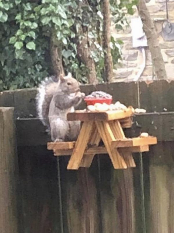 Squirrel Sitting On Picnic Bench